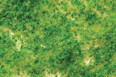 Light green foliage